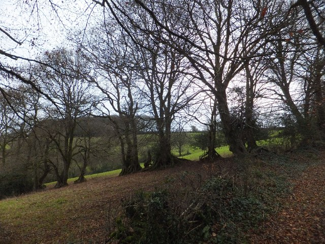 Looking towards Warnicombe Plantation from Newte's Hill