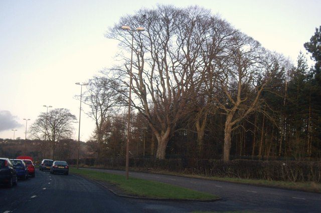 Dual carriageway along west side of Caird Park