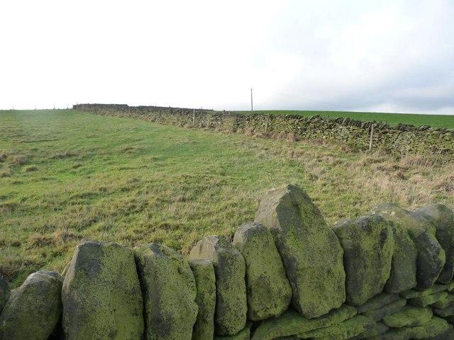 Green field, green walls