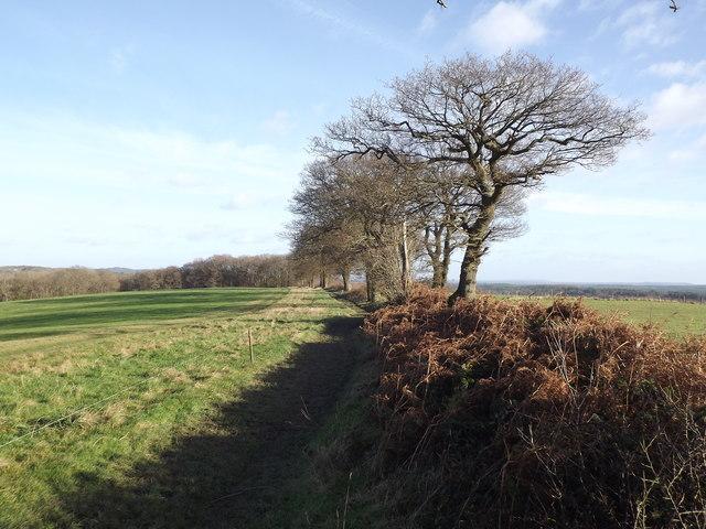 Footpath East of Hallsgrove Copse
