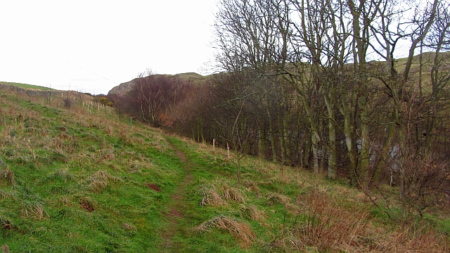 Wooded slope, Mire Loch