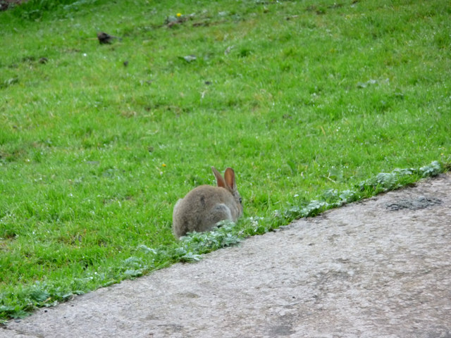 Rabbit at Troutbeck, Cumbria