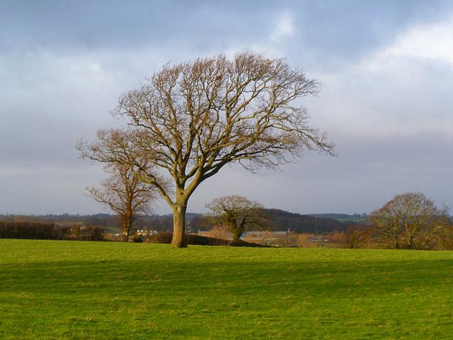 Farmland, Westward