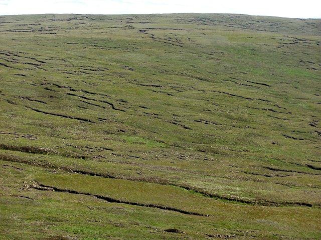 Bogs, Maovally