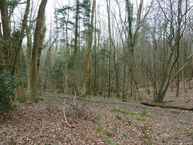 Minepit Wood by Oldlands Hill