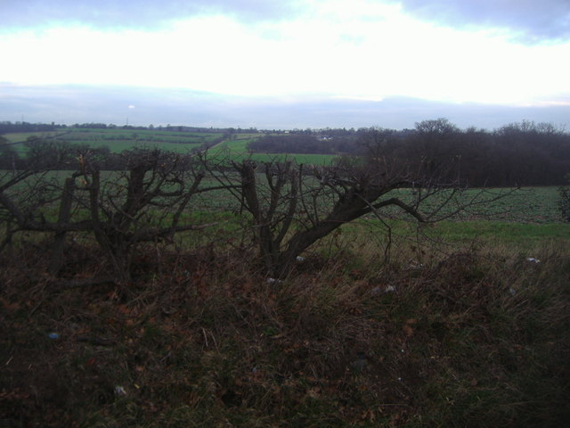 Fields by Ferny Hill, Enfield Chase
