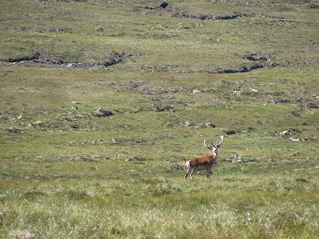 Stag on Maovally
