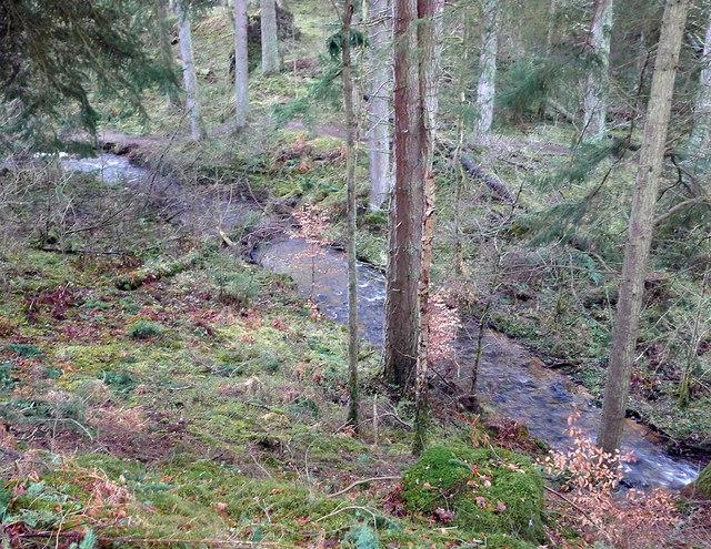 In Littleburn Wood