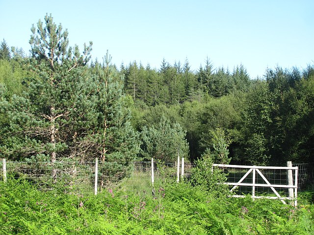 Plantation, Glen Cassley