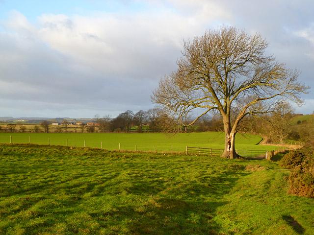 Farmland, Hutton Magna