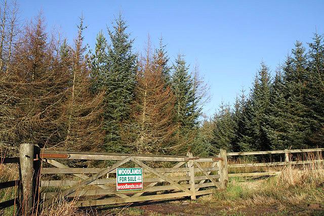 Woodheads Woodland