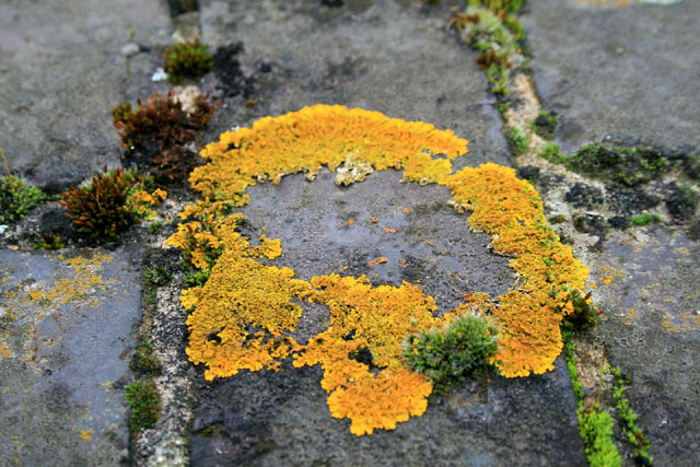 Lichen on a railway bridge brickwork
