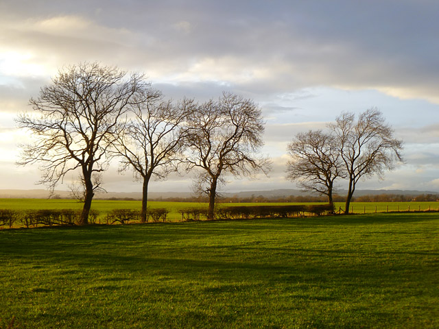 Farmland, Bolton-on-Swale