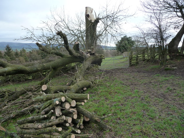 Footpath with fallen tree