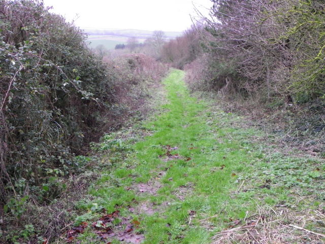 Bridleway near Long Bredy