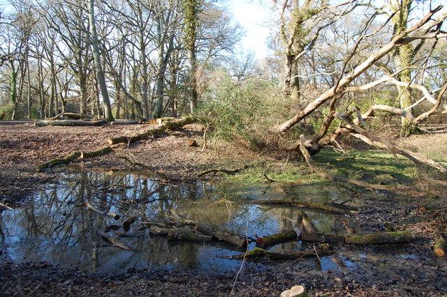 Disused marl pit near Brockenhurst