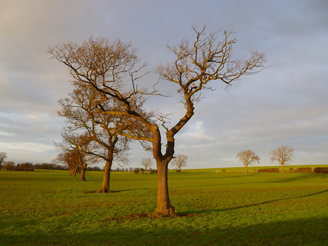 Pasture, Bolton-on-Swale