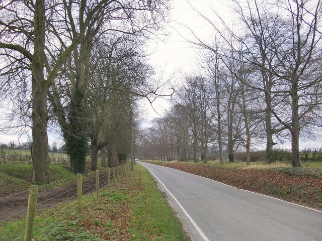 The road from Bookham to Polesden Lacey