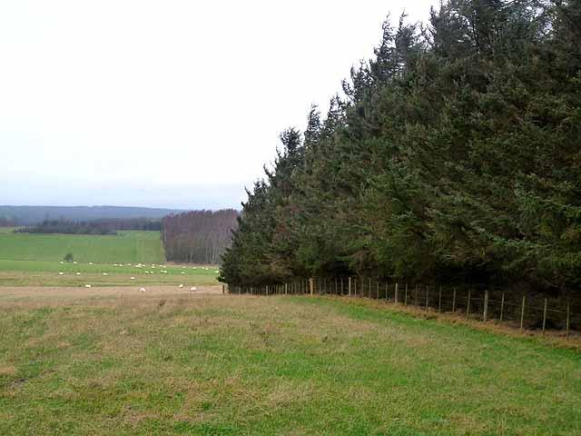 Coldwell Hill Plantation