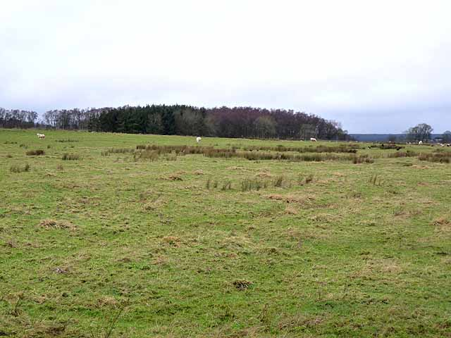 Looking across the fields to Hall's Hill Plantation