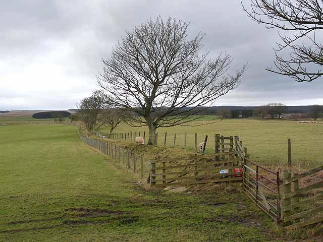 Field boundary near Harwood Gate