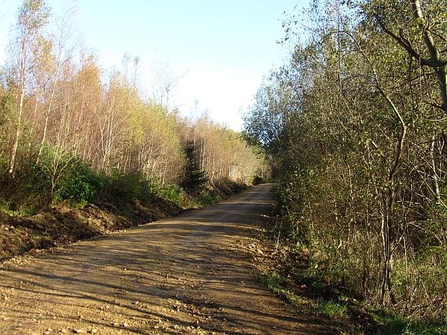 Road, Merkland Wood