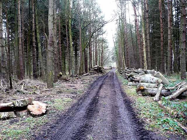 Plantation near Rothley