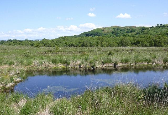 Pool, bog and hillside north of Tregaron, Ceredigion