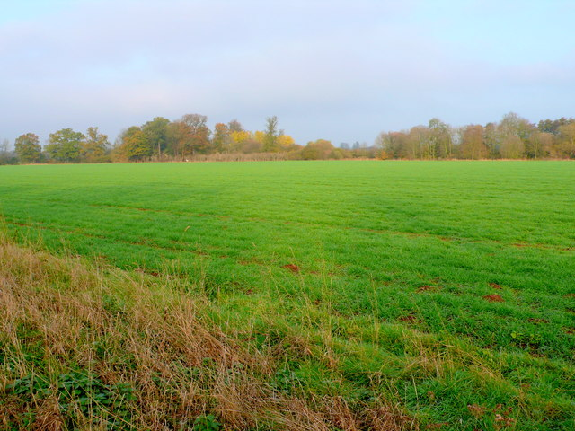Fields at Sherbourne Park