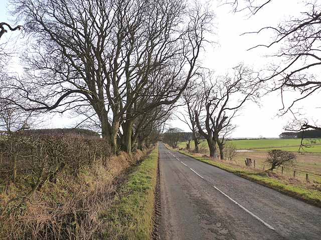 Tree-lined country road near Needless Hall Moor Farm