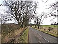 NZ1087 : Tree-lined country road near Needless Hall Moor Farm by Oliver Dixon