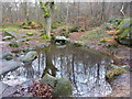 SK2477 : Pool in Horse Hay Coppice by Peter Barr