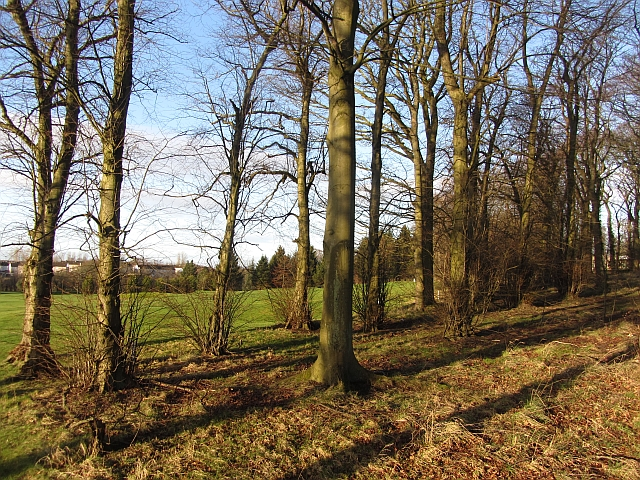 Woodland, Jerviston Estate