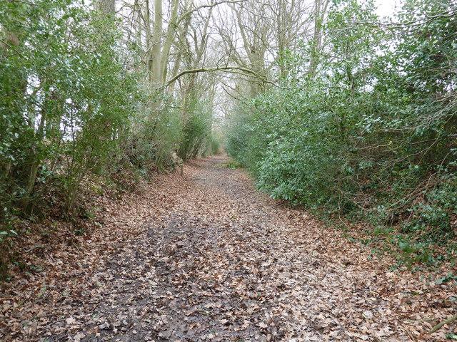 Avenue of trees on path to Wyatt Wood