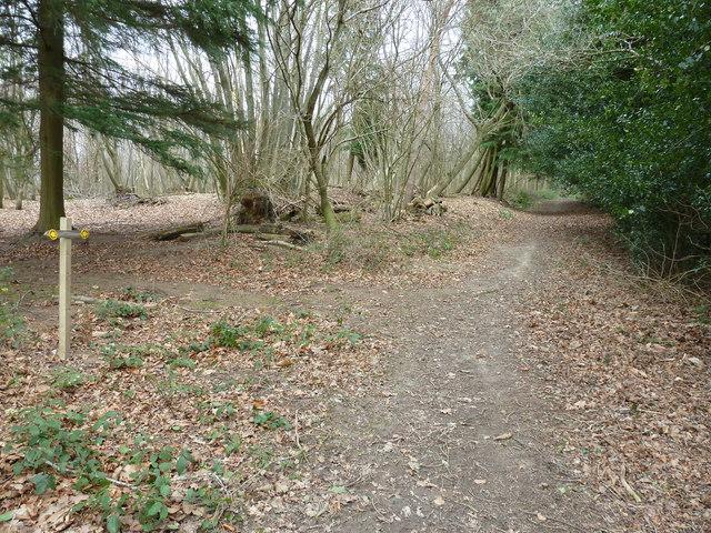 Waymarker in Wyatt Wood