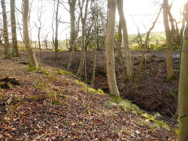 Wester Shore Wood, Blackness