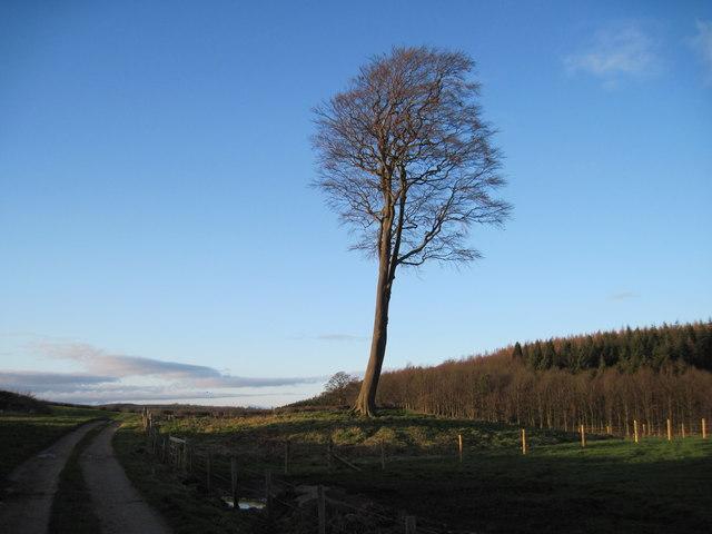 Lone  Tree  on  Tumulus