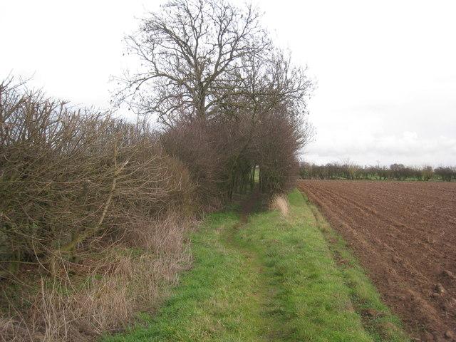 Bridleway through the hedge