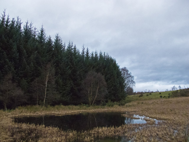 Conifer plantation near Catchpenny