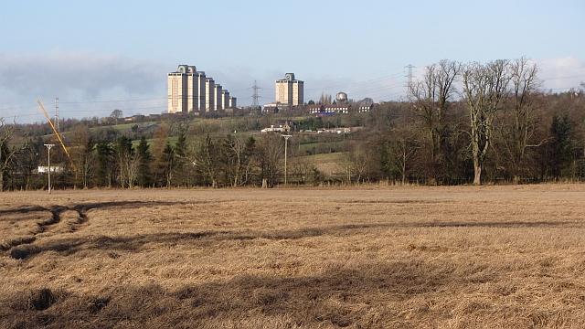 Barley field, Upper Carbarns