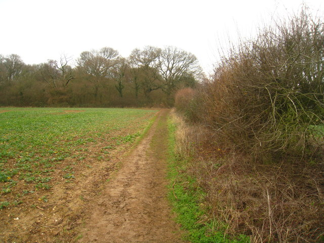 Path towards Well's Copse