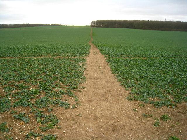 Path to Bull's Bushes Copse