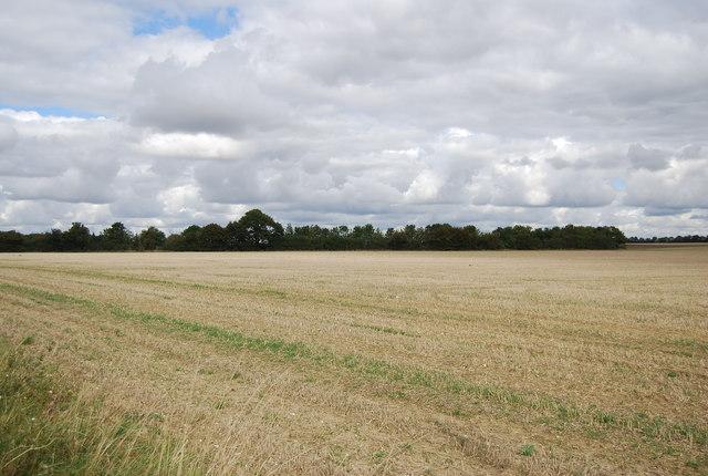 Farmland and woodland
