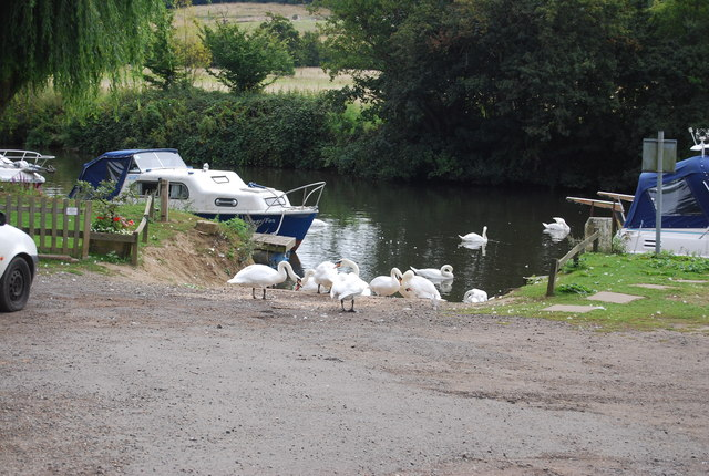 Swans on the slipway