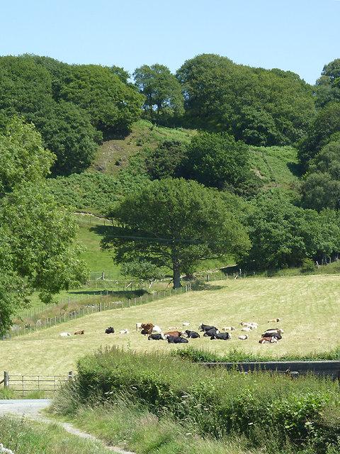 Wooded hillside north of Tregaron, Ceredigion