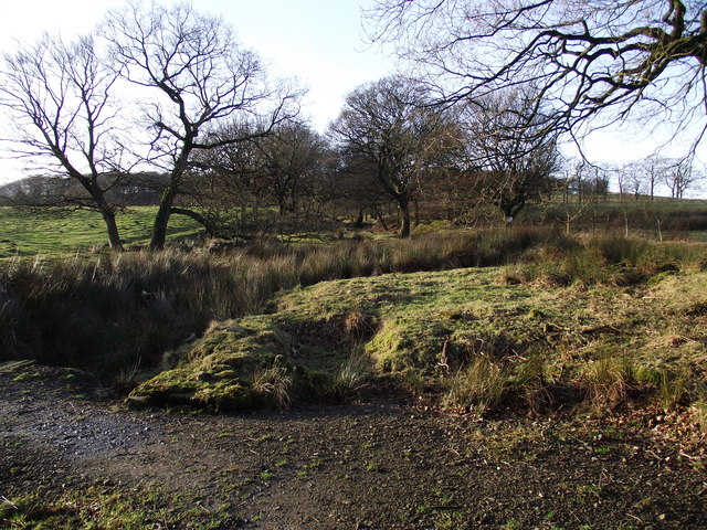 Woodland on the moor