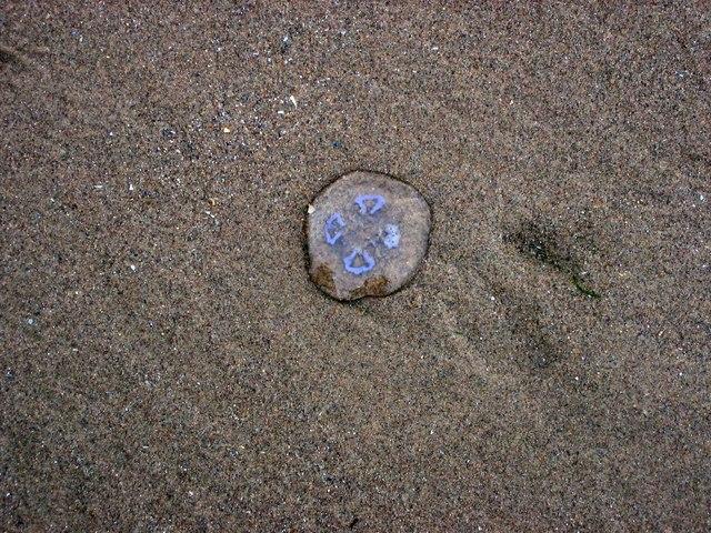 Jellyfish stranded on Rhossili Beach