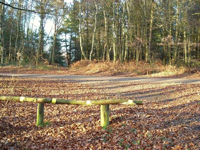Crossroad in Harlow Wood
