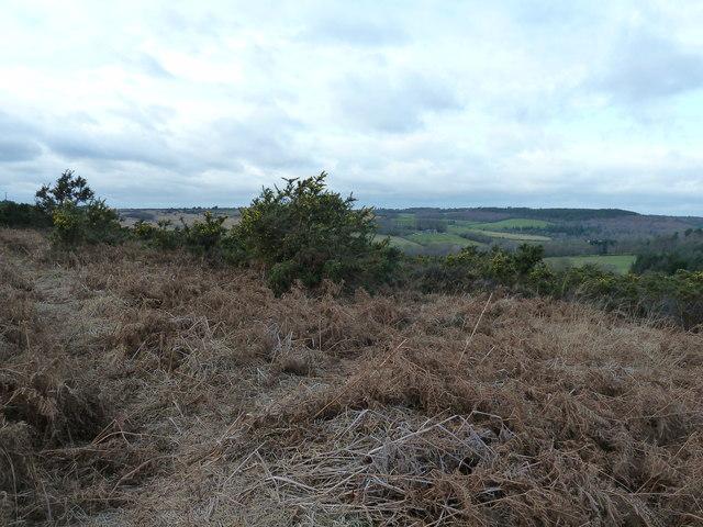 Gorse and bracken on Ashdown Forest