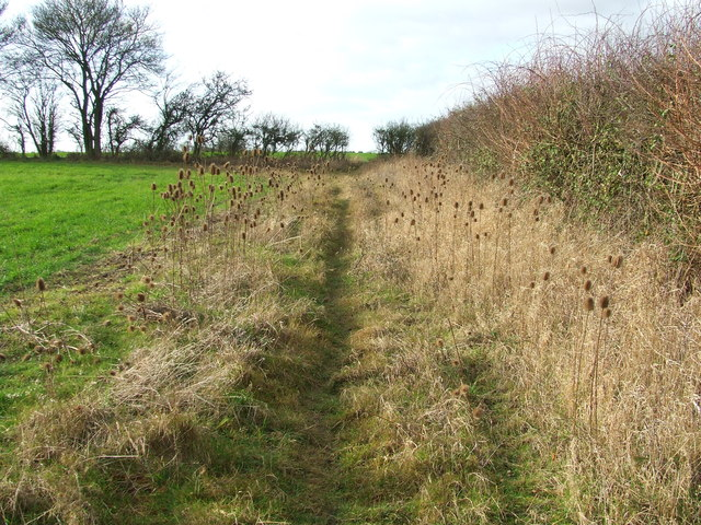 Path Of Teasels